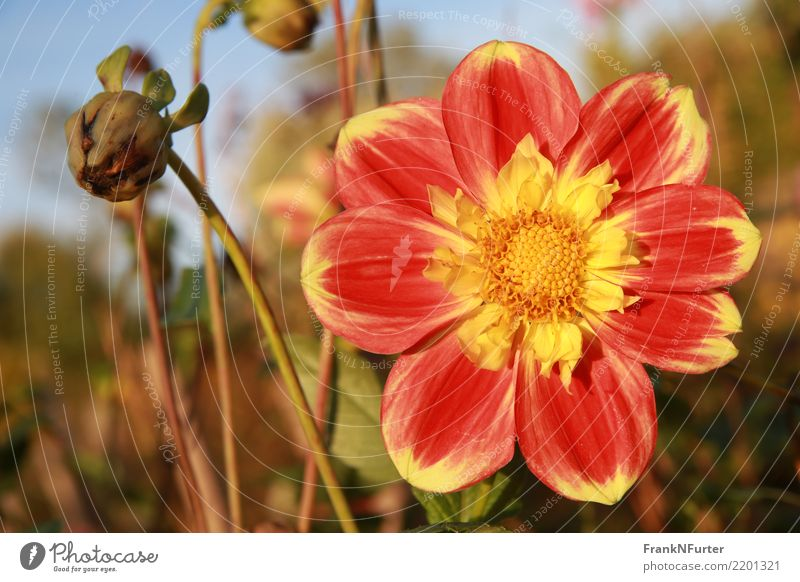 Taming the Sun Nature Plant Blossom Yellow Red Multicoloured Exterior shot Close-up Deserted Light Sunlight Central perspective