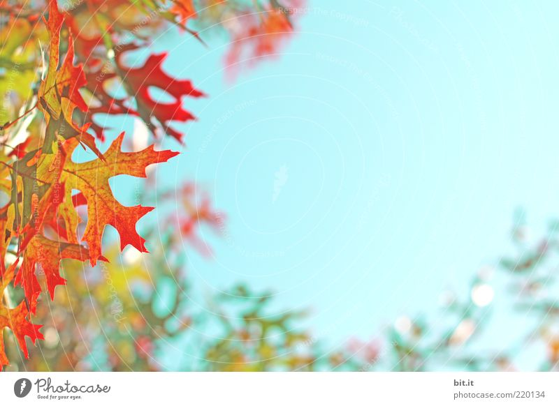 Nature Sky Green Blue Plant Red Summer Leaf Yellow Autumn Air Glittering Environment Change Kitsch Transience