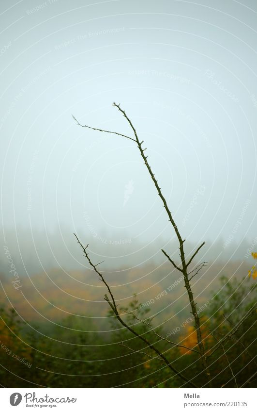 autumn Environment Nature Landscape Plant Sky Autumn Climate Weather Bad weather Fog Branch Forest Faded To dry up Growth Natural Gray Moody End