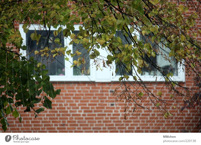 Nature Tree Green Red Calm Leaf House (Residential Structure) Wall (building) Window Wall (barrier) Building Facade Observe Branch Brick Window pane