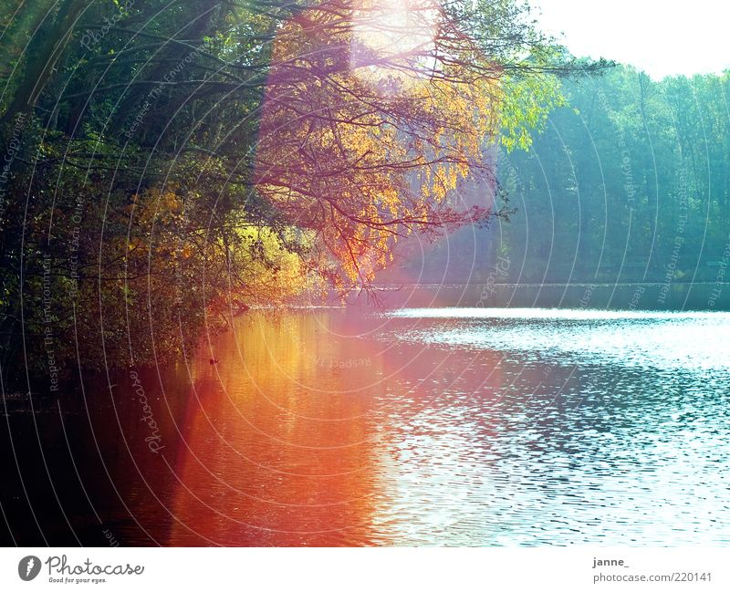 colorful lake view Environment Nature Landscape Plant Water Sky Sun Sunlight Autumn Beautiful weather Tree Blue Gold Green Colour photo Multicoloured