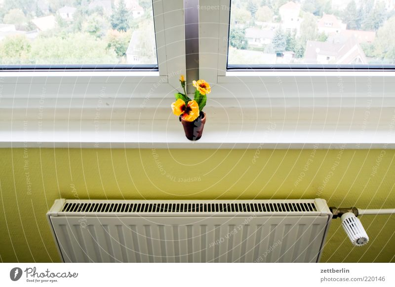 Window, Flower, Heating Wall (barrier) Wall (building) Longing Wanderlust Loneliness Flowerpot Window board Vantage point Living or residing Colour photo