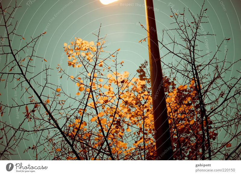 Sky Blue Plant Leaf Dark Cold Autumn Brown Lighting Lantern Shriveled Autumn leaves Twigs and branches Lamp post Night Apocalyptic sentiment