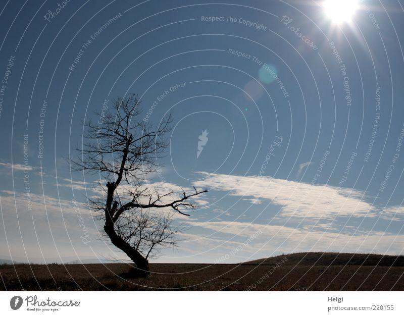 Nature Sky White Tree Sun Blue Plant Black Clouds Loneliness Meadow Autumn Grass Landscape Environment Horizon