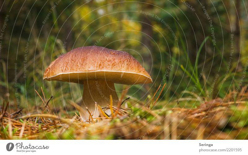 What a fat thing. Nature Plant Animal Autumn Tree Grass Moss Fern Park Forest Growth Boletus Mushroom Mushroom picker Mushroom soup Poison Edible Colour photo