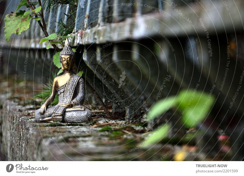 Buddha meditating on old wall in front of old iron fence Harmonious Relaxation Calm Meditation Art Culture Wall (barrier) Wall (building) Decoration Kitsch