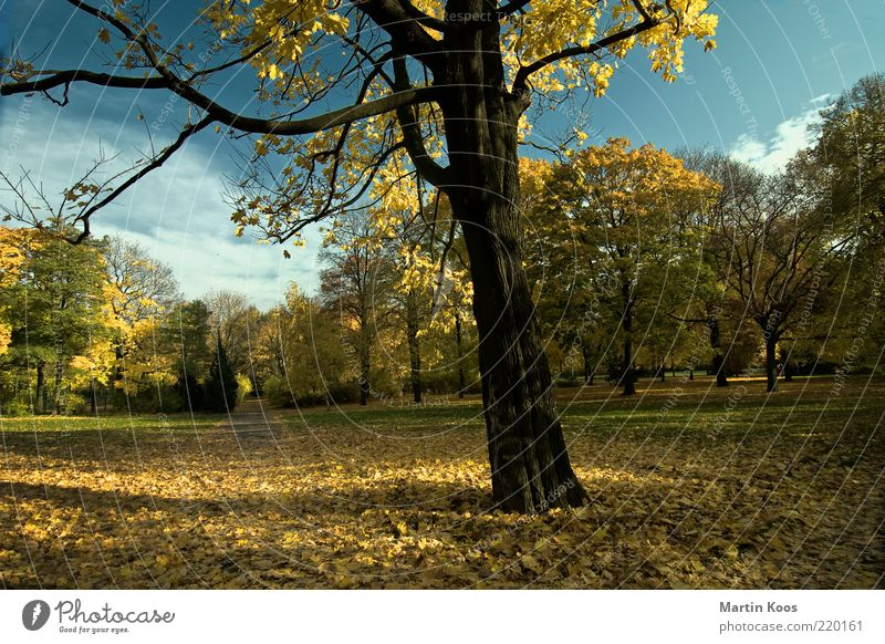 One day a year Environment Nature Landscape Tree Park Esthetic Positive Yellow Gold End Far-off places Moody Lanes & trails Time Autumn Deciduous tree Dyeing