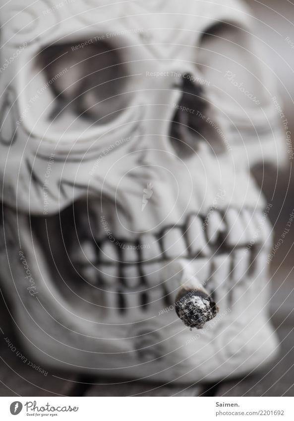Sucht Raucher rauchen nikotin Zigarette Schädel totenkopf selbstgedreht Colour photo Zähne augenhöhle asche glut sucht Tod genussmittel