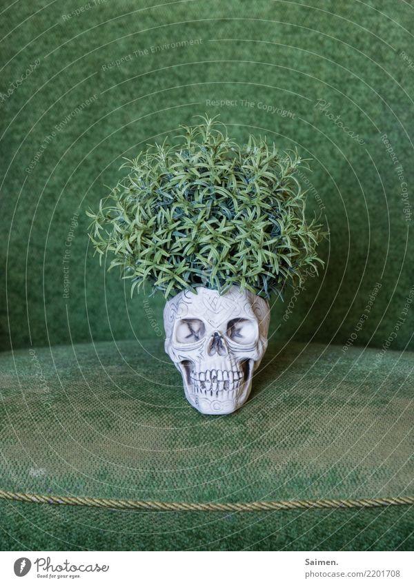 Der grüne Tod wachsen Totenkopf Schädel Kopf Leben Pflanze Kreislauf Gebiss Zähne skurril abstrakt verstörend vergänglich Sessel