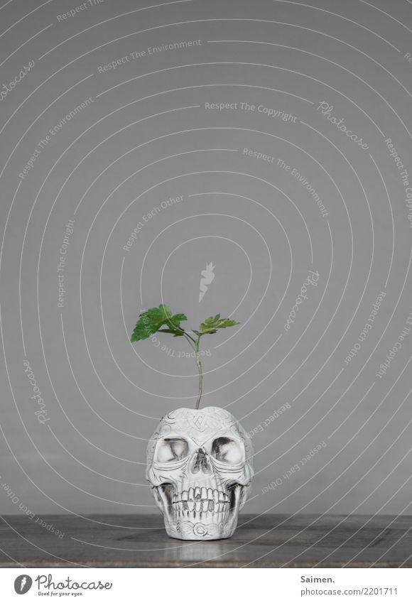 Aus alt wird neu Natur Baum Blumentopf Blätter Bonsai wachsen Totenkopf Schädel Kopf Tod Leben Pflanze Kreislauf Gebiss Zähne skurril abstrakt verstörend