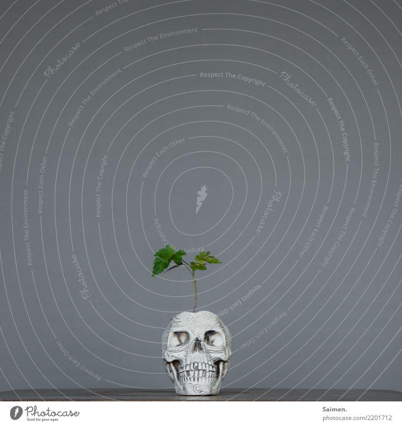 Bonsai des Todes grün vergänglich verstörend abstrakt skurril Zähne Gebiss Kreislauf Pflanze Leben Kopf Schädel Totenkopf wachsen Blätter Blumentopf Baum Natur