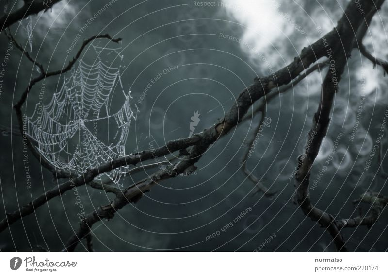 Autumn, the spinning of the spider Environment Nature Landscape Bad weather Rain Plant Tree Sign Hang Dark Sustainability Wet Natural Moody Network Drop Dew