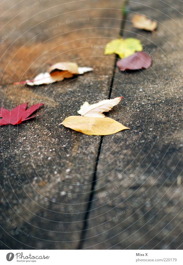 foliage Autumn Leaf Multicoloured Autumn leaves Autumnal Maple leaf Sidewalk Slippery surface Colour photo Exterior shot Deserted Copy Space bottom