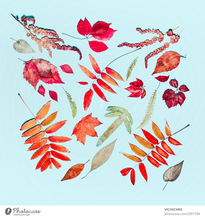 Autumn Composing from different autumn colorful leaves Style Design Decoration Thanksgiving Nature Plant Leaf Sign Pattern Ornament Still Life Multicoloured Red
