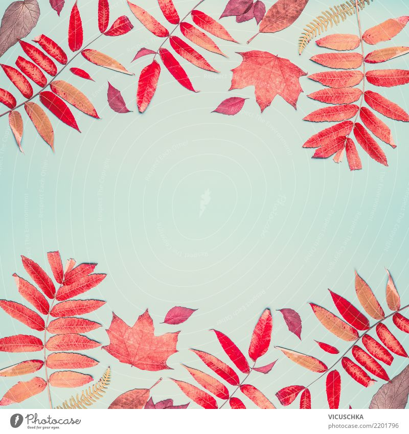 Autumn background with red foliage pattern Style Design Thanksgiving Nature Leaf Decoration Sign Background picture Composing Frame Hip & trendy Red Pattern