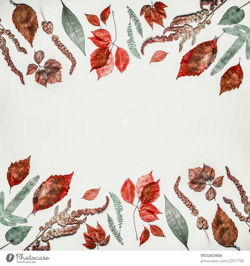 Autumn pattern background frame with autumn leaves Style Thanksgiving Nature Plant Leaf Decoration Hip & trendy Design Arranged Background picture Composing