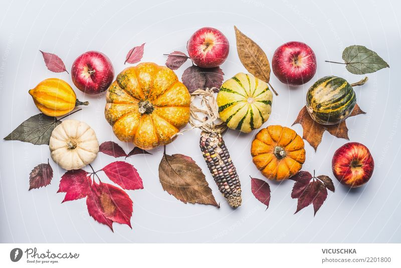 Autumn with pumpkin, apples and leaves Vegetable Apple Style Design Thanksgiving Hallowe'en Nature Plant Decoration Ornament Composing Hipster November Pumpkin
