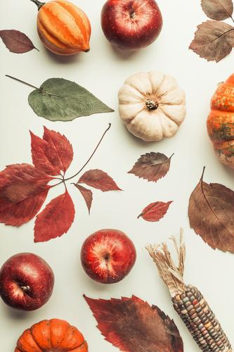 Autumn composing with colorful pumpkin Vegetable Apple Style Design Decoration Thanksgiving Hallowe'en Nature Composing Pumpkin Leaf Corn cob Still Life