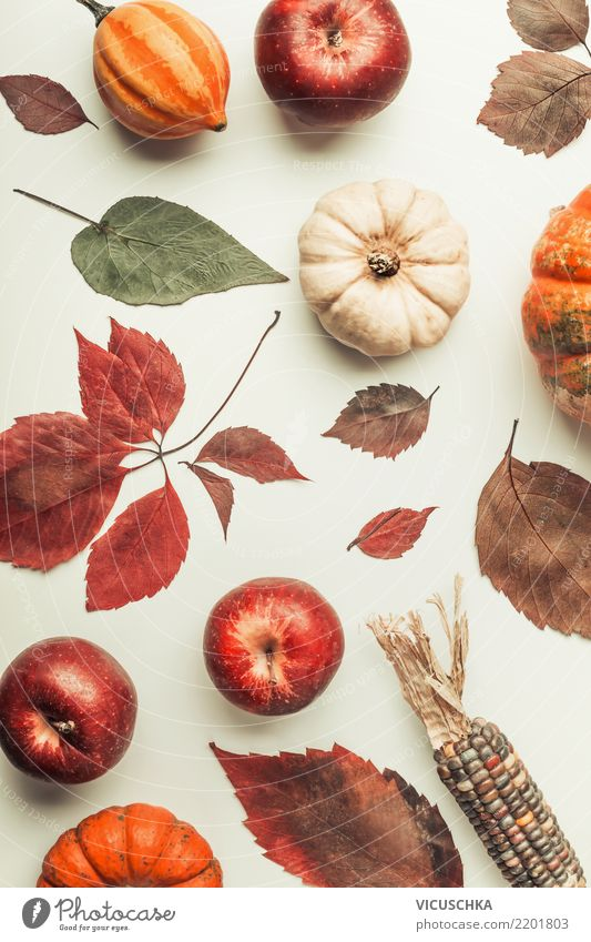 Nature Leaf Autumn Style Design Decoration Vegetable Apple Still Life Hallowe'en Pumpkin Thanksgiving Composing Corn cob