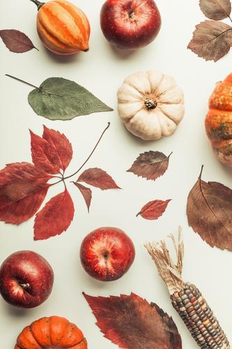 Nature Leaf Autumn Style Design Decoration Vegetable Apple Still Life Hallowe'en Pumpkin Thanksgiving Composing Corn cob