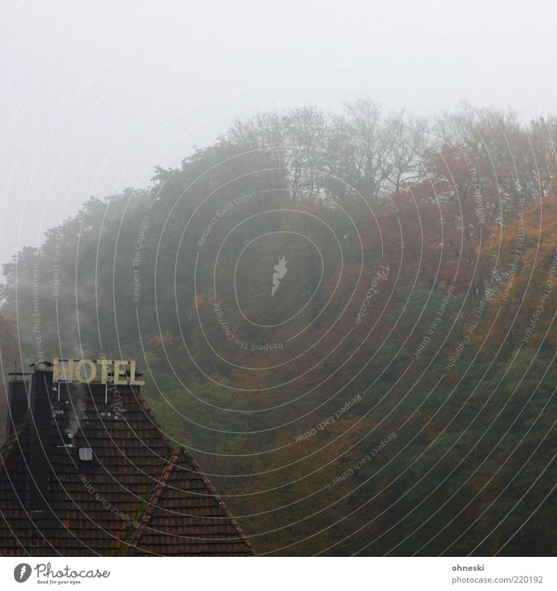 shining Clouds Autumn Bad weather Fog Forest House (Residential Structure) Hotel Roof Characters Signs and labeling Loneliness Creepy Dank Damp Colour photo