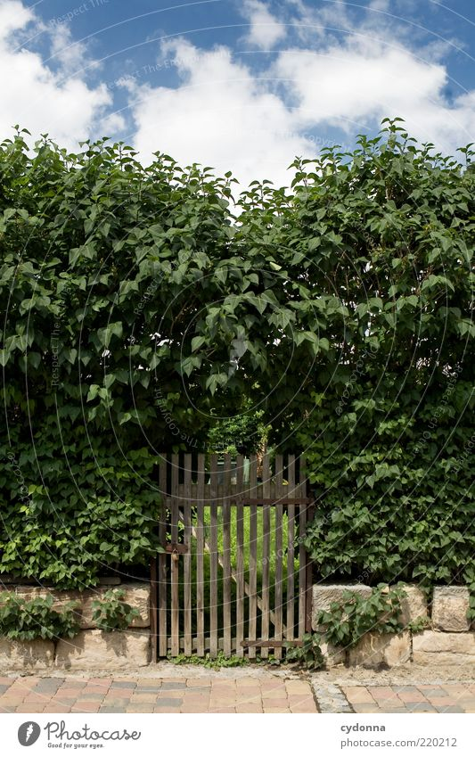 Nature Sky Calm Garden Lanes & trails Environment Closed Bushes Mysterious Discover Sidewalk Entrance Barrier Expectation Paving stone Hedge