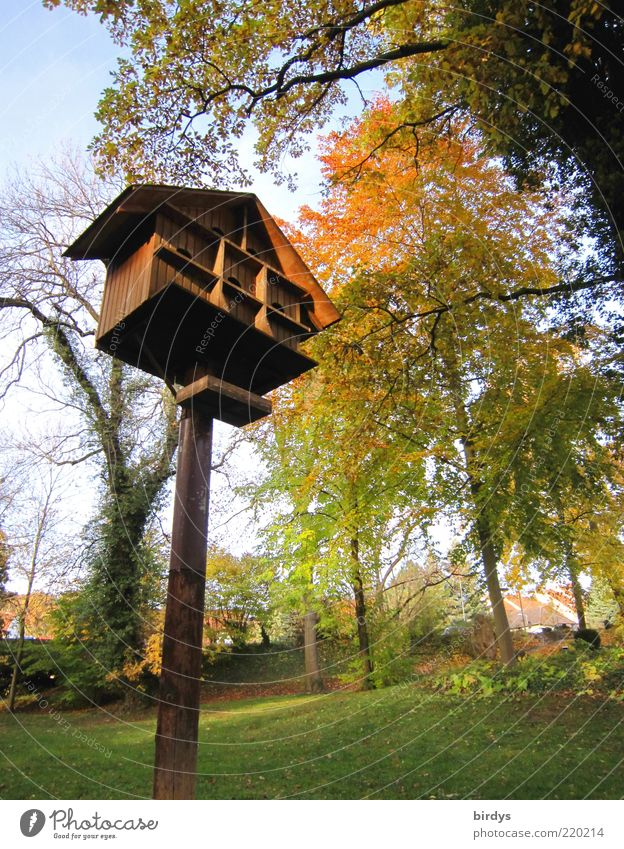 Parking garage for birds Autumn Beautiful weather Tall Positive Moody Birdhouse Tree Groomed Relaxation Garden Multicoloured Autumnal colours Indian Summer