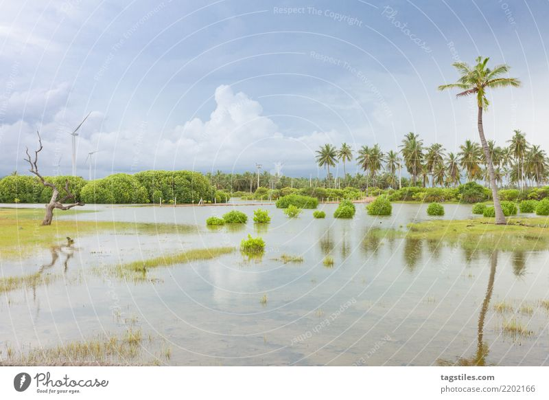 Kalpitiya Lagoon, Sri Lanka Nature Vacation & Travel Summer Water Sun Landscape Relaxation Clouds Calm Beach Coast Tourism Freedom Idyll Drinking water