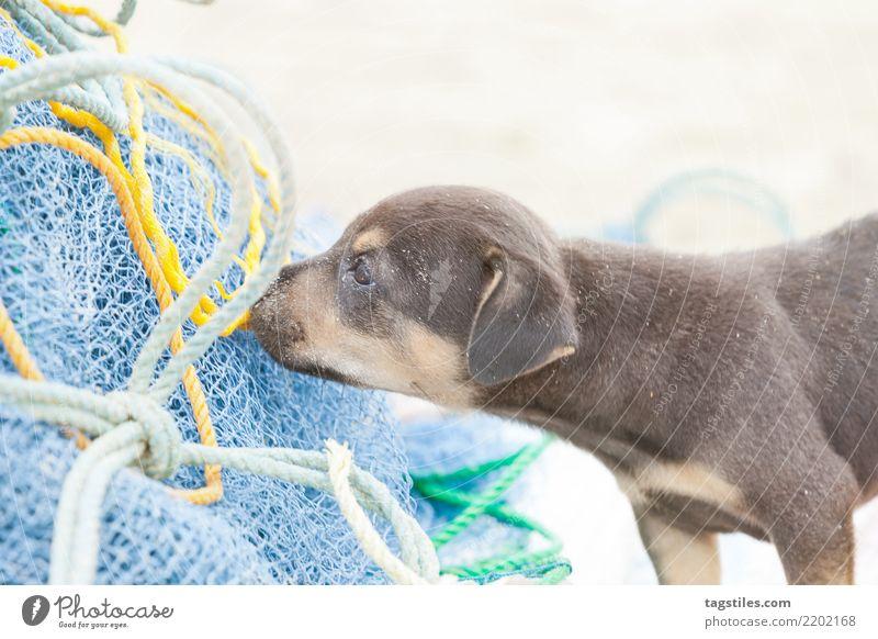 Dog-puppy snooping at a fishing net, Sri Lanka Kalpitiya Puppy Sniff Fishing (Angle) Fishery Fishing net Fishnet tights Fisherman Asia Vacation & Travel
