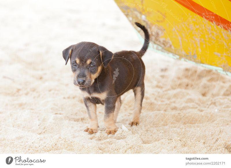 Dog-puppy waiting for mummy, Sri Lanka Nature Vacation & Travel Summer Sun Landscape Relaxation Calm Beach Natural Tourism Freedom Sand Idyll Wait Card