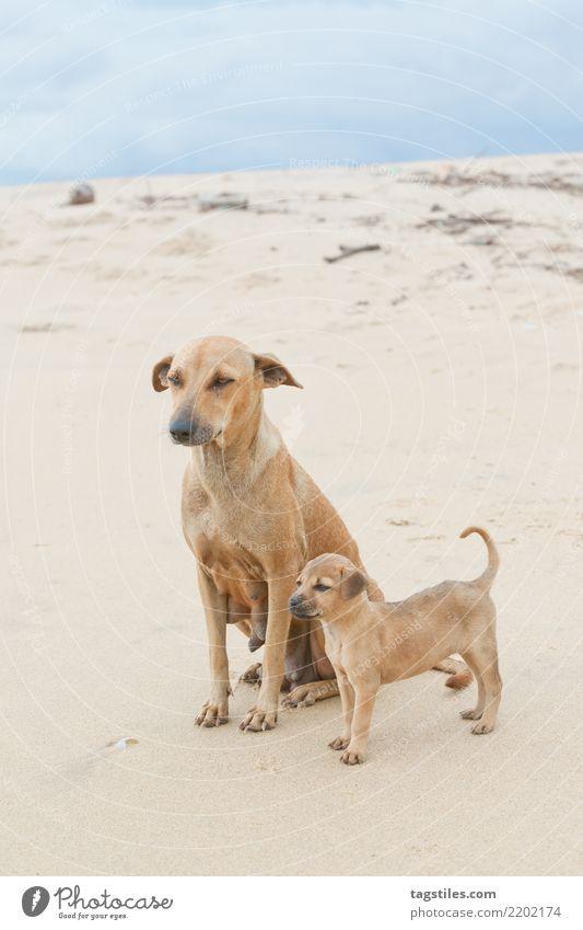 Family portrait; Sri Lanka Kalpitiya Puppy Dog Asia Vacation & Travel Idyll Freedom Card Tourism Paradise Nature intact Landscape Beach Sand Ocean Water Coast