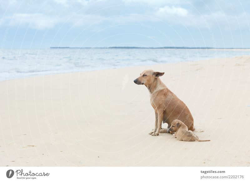 Enjoying the wind, Sri Lanka, Asia Nature Vacation & Travel Dog Water Landscape Ocean Relaxation Calm Beach Coast Tourism Freedom Sand Idyll Wind To enjoy
