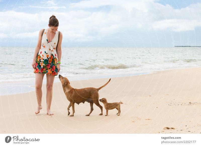 Sniffing and learning, Kalpitiya, Sri Lanka Puppy Dog Asia Vacation & Travel Traveling Idyll Freedom Card Tourism Sun Sunbeam Summer Paradise Paradisical Nature