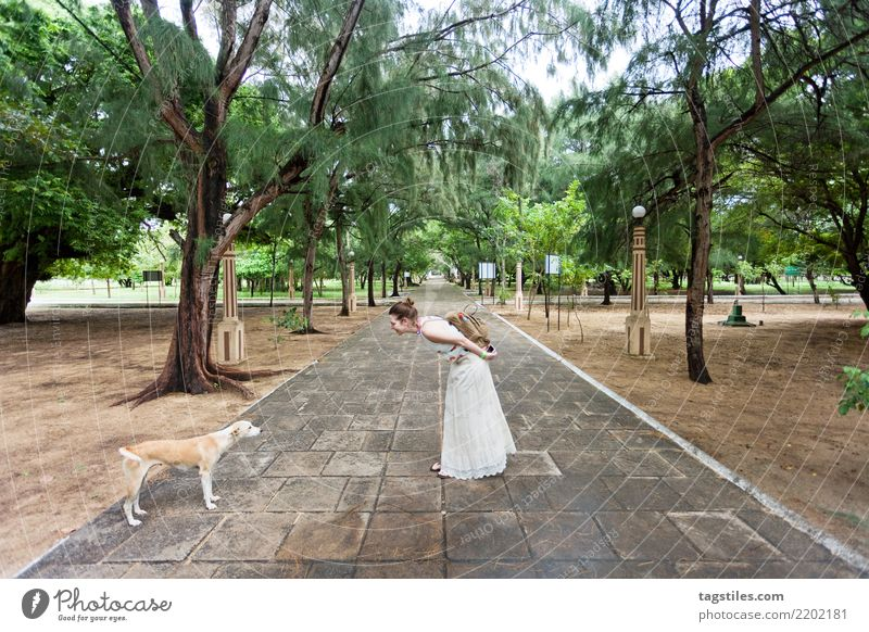 Meeting dogs at St. Anne´s church, Sri Lanka Thalawila St. Anne's church Kalpitiya Asia Vacation & Travel Woman Traveling Idyll Freedom liberty Card Tourism Sun
