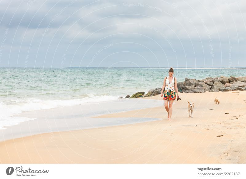 Dogs following tourists, Sri Lanka Woman Nature Vacation & Travel Summer Water Sun Landscape Ocean Relaxation Beach Coast Tourism Freedom Sand Idyll