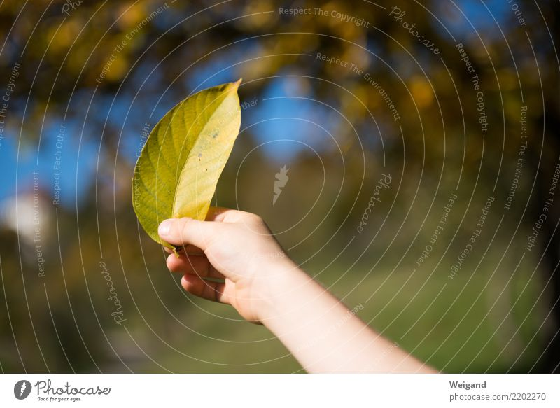 Child Leaf Joy Life Yellow Autumn Boy (child) Trip Contentment Hiking Infancy Gold To enjoy Happiness Gift Well-being