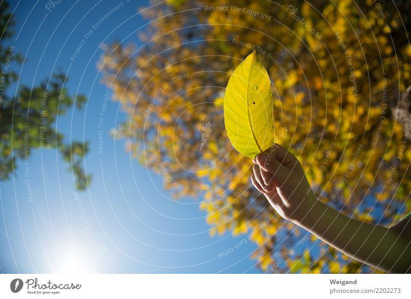 Child Human being Sun Hand Leaf Joy Yellow Autumn Funny Contentment Hiking Infancy Gold Harmonious Meditation Fragrance