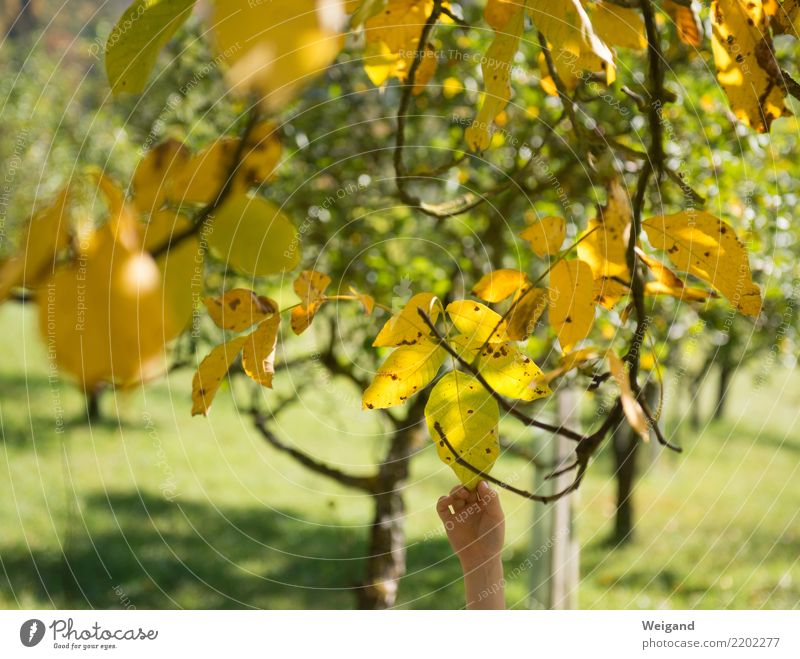 Child Human being Tree Hand Relaxation Leaf Girl Yellow Autumn Boy (child) Happy Infancy Fresh To enjoy Happiness Friendliness