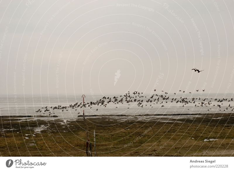 Nature Sky Ocean Clouds Animal Landscape Air Bird Coast Flying Horizon Beginning North Sea Departure Mud flats Nordic