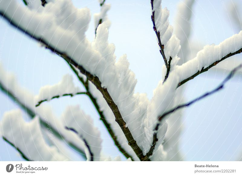 Nature Plant Blue Water White Relaxation Winter Black Cold Design Snowfall Field Weather Ice Esthetic Power