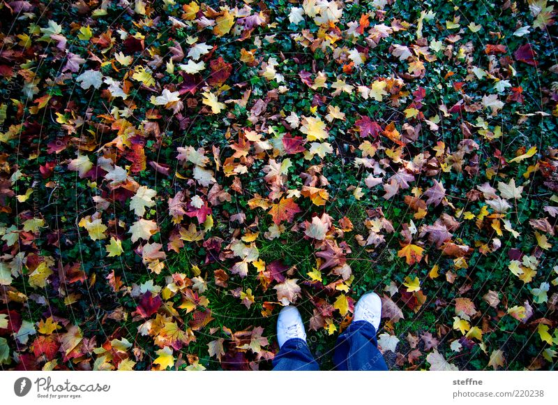 colourful is healthy Nature Autumn Leaf Meadow Multicoloured Autumn leaves Legs Colour photo Exterior shot Feet Autumnal Autumnal colours Bird's-eye view