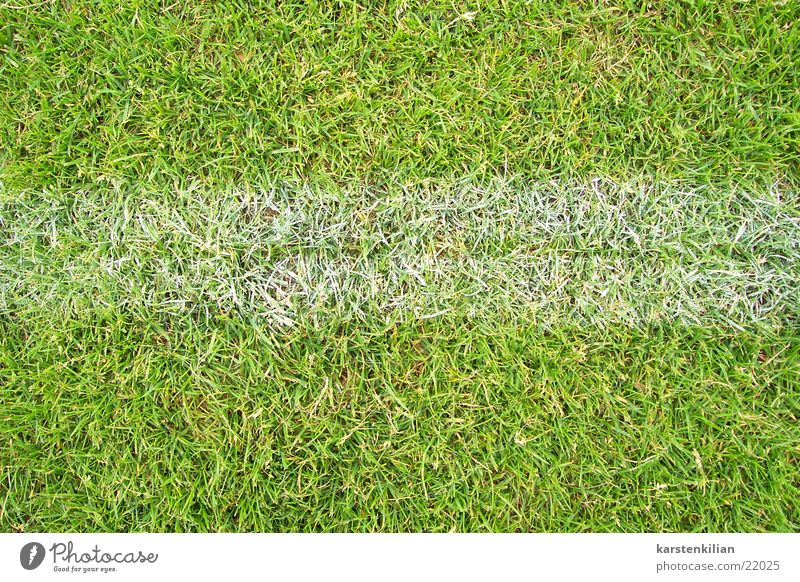 Playing on the line Green White Playing field Line Edge Meadow Grass Sports Lawn Soccer Border Signs and labeling