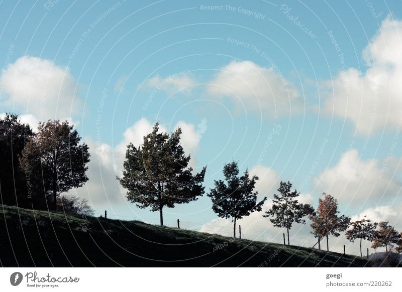 Nature Sky White Tree Green Blue Summer Clouds Street Meadow Autumn Grass Landscape Brown Environment Esthetic