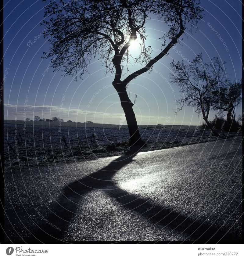 Nature Tree Sun Winter Street Dark Cold Landscape Ice Moody Field Glittering Weather Environment Frost Climate