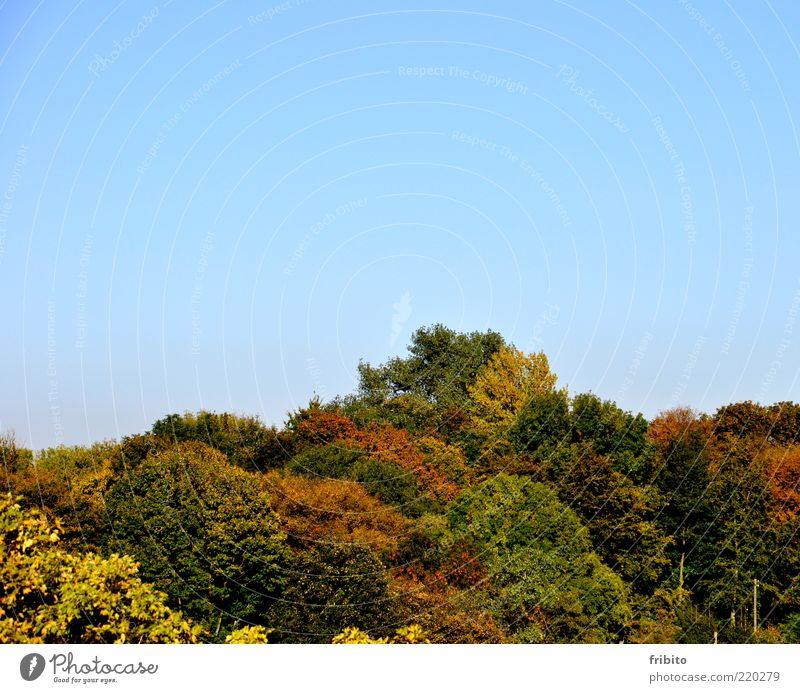 Golden Autumn Environment Nature Landscape Plant Air Sky Weather Beautiful weather Tree Leaf Forest Emotions Moody Romance Authentic Longing Esthetic Loneliness