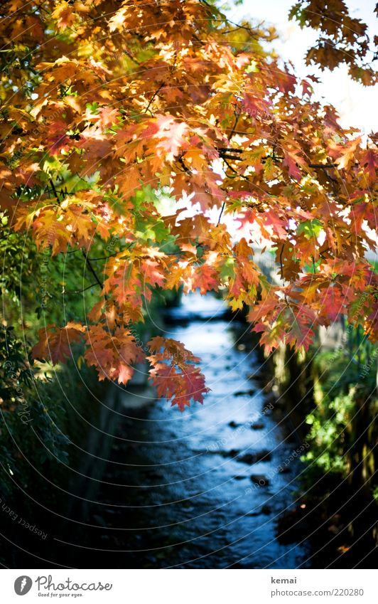 The stream and its flora Environment Nature Landscape Plant Water Sunlight Autumn Beautiful weather Tree Bushes Leaf Foliage plant Wild plant Brook River