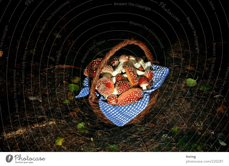 summersause Mushroom picker Nature Earth Forest Good luck charm Happy Amanita mushroom Basket Colour photo Exterior shot Evening Twilight Night Artificial light