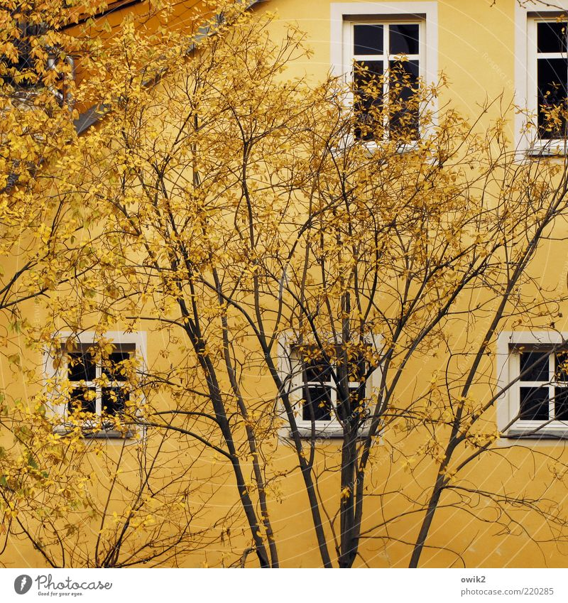 Yellow on yellow Plant Autumn Tree Leaf Autumn leaves House (Residential Structure) Wall (barrier) Wall (building) Facade Window Roof Window frame Window pane