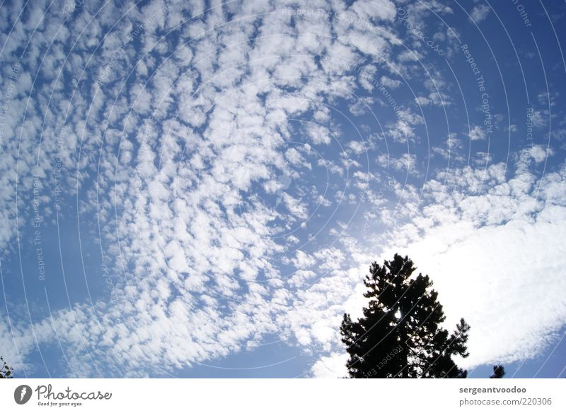 skyscraper Environment Nature Plant Air Sky Clouds Climate Weather Beautiful weather Tree Relaxation To enjoy Fantastic Free Bright Natural Blue Black White