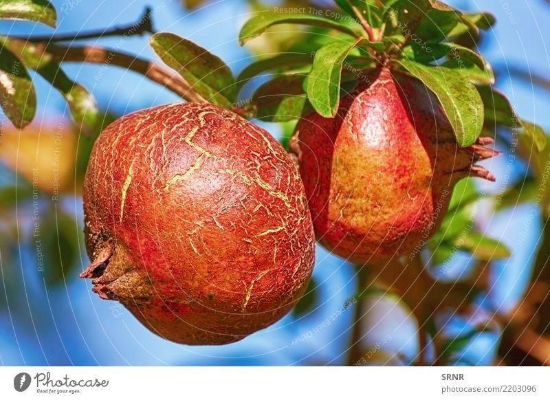 Fruit of Punica Granatum Plant Healthy Eating Food Diet Vegetarian diet Juicy Edible Pomegranate Grenade